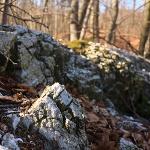 offener Gips im Wald bei Questenberg