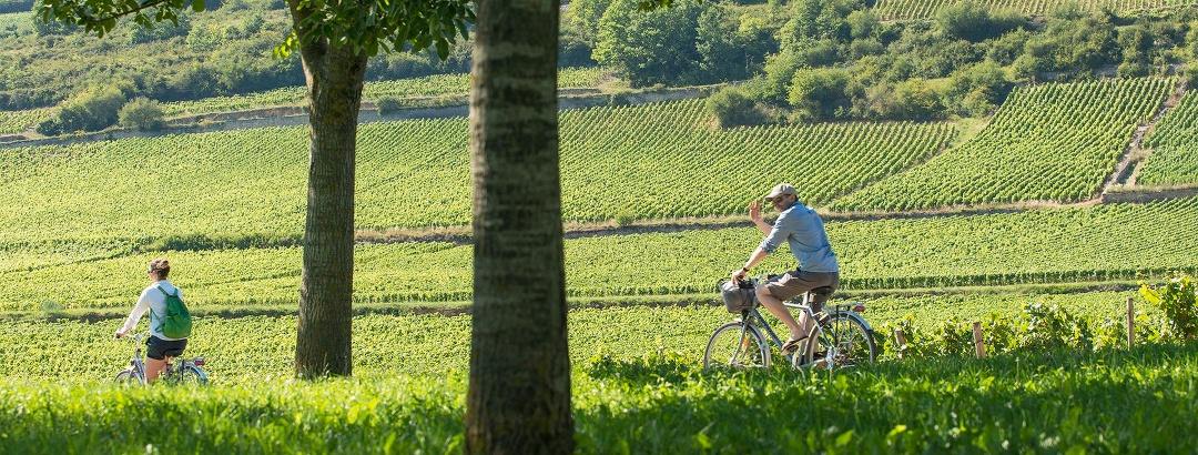 Vélo dans les vignobles en Bourgogne