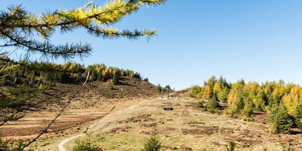 Panoramaweg Feldis im Herbst