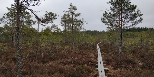 Punassuon pitkospuilla Teijon kansallispuistossa