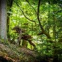Image de profil de Marieluise Jutz
