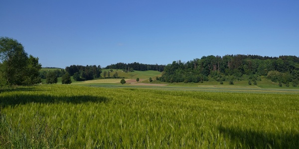 Typische Landschaft in der Nähe von Nebikon