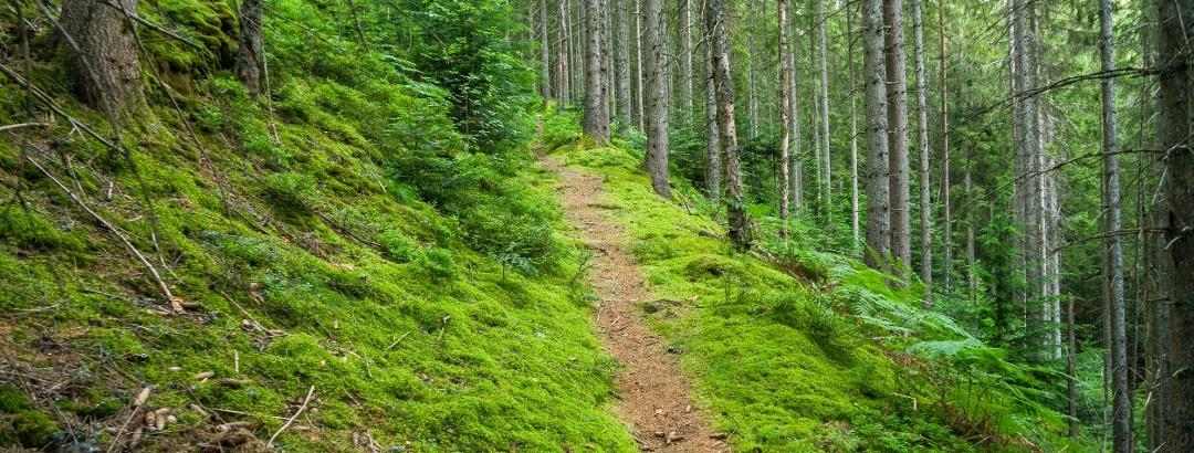 Die schmalen Wanderpfade sind purer Wandergenuss
