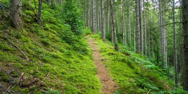Zauberhafte Pfade führen durch den Wald
