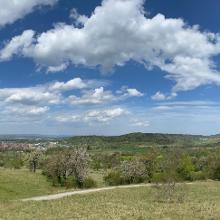 Blick über Streuobstwiesen ins Tal