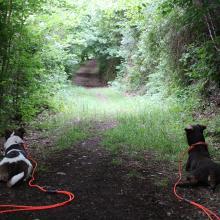 Auch die Hunde mochten diese Tour Freitag, 5. Juni 2020 15:11:13