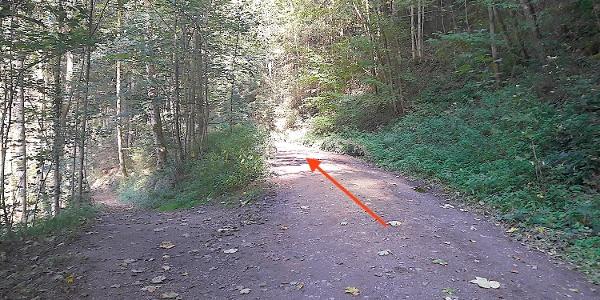 Wanderweg Nr. 6 im Perlbachtal