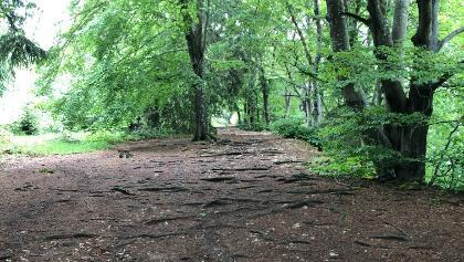 Waldweg auf der Wanderung