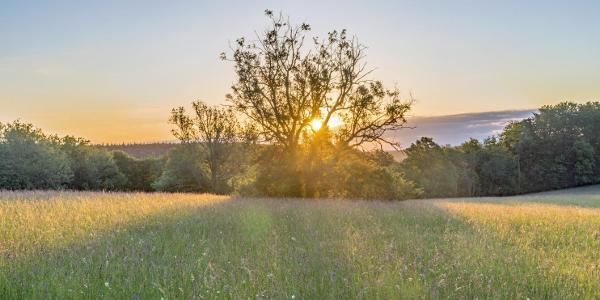 Naturschutzgebiet Wonhalde-Spielberg