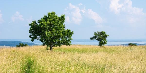 A Fekete-hegyi fáslegelő részlete háttérben a Balatonnal