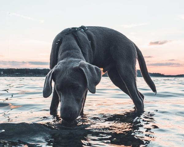 Urlaub mit Hund im Vogtland - Wasser