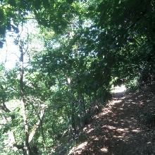 Eichenwald