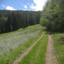 Sentiero.