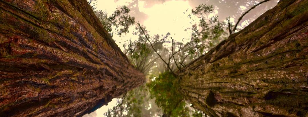 """Giant Forest"" im Sequoia Nationalpark"