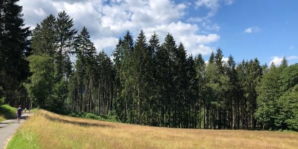 Blick am Sternfeld ins Tal der Misselbach