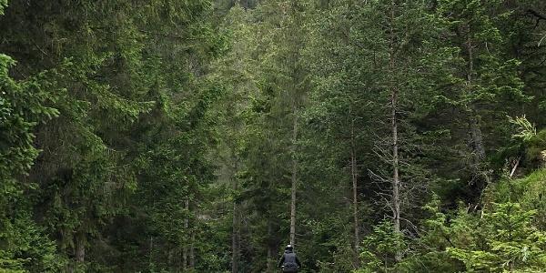Fahrweg zur Latschenhütte