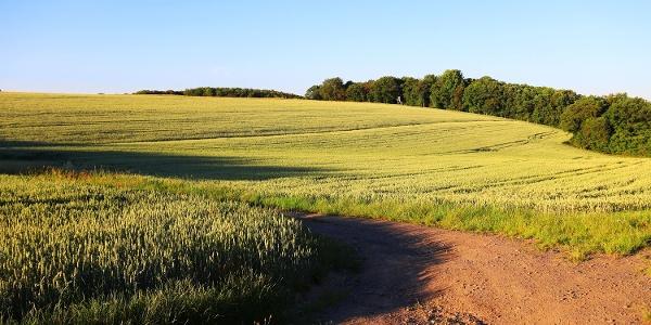 Felder bei Kürrenberg