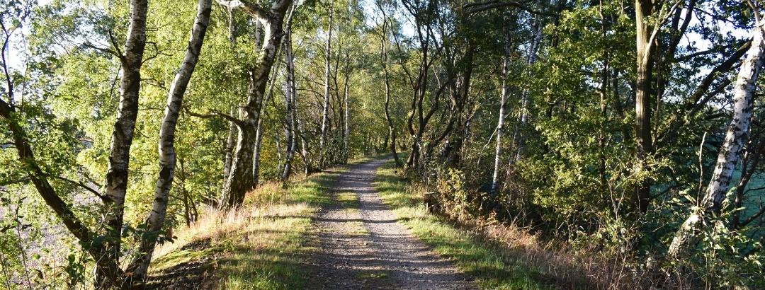 Auerbacher Rundwanderweg auf der alten Schmalspurbahntrasse