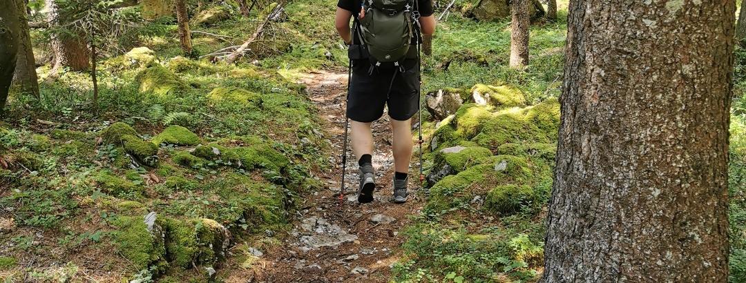Sanfte Wanderwege in den Wäldern