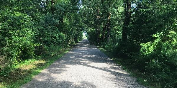 auf breitem und schattigen Weg geht es in das Loisach-Kochelsee Moor hinein