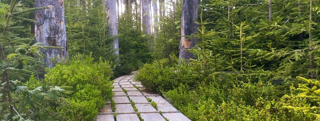 Aufichtenwaldsteg
