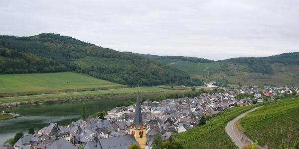 Blick vom Sortengarten und Moselsteig auf Zeltingen-Rachtig flussabwärts
