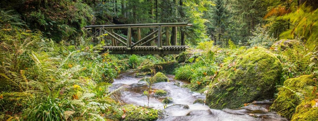 Bridge in the Black Forest