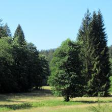 Talwiesen