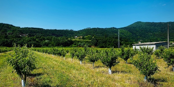 Irrigating Cova da Beira - Valhelhas > Vale Formoso - GRZ: Stage 1