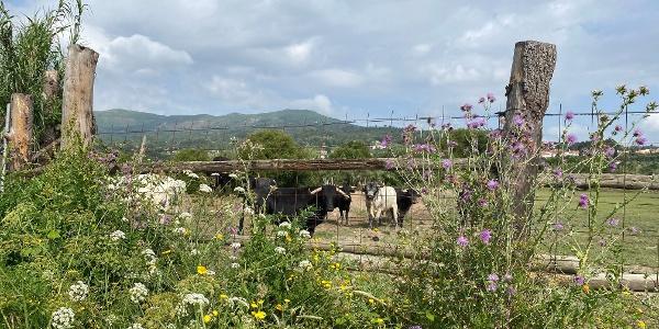 Irrigando a Cova da Beira: Vale Formoso > Borralheira [GR33 - GRZ: Etapa 2]