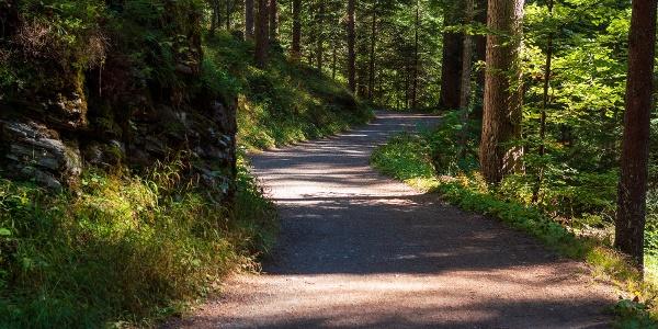 Flimser Wald