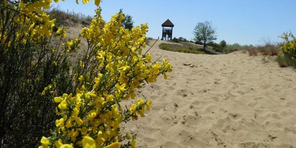 The Sands of Đurđevac