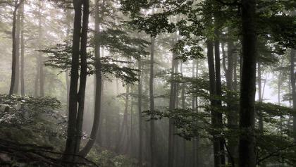 Waldstück zu Beginn