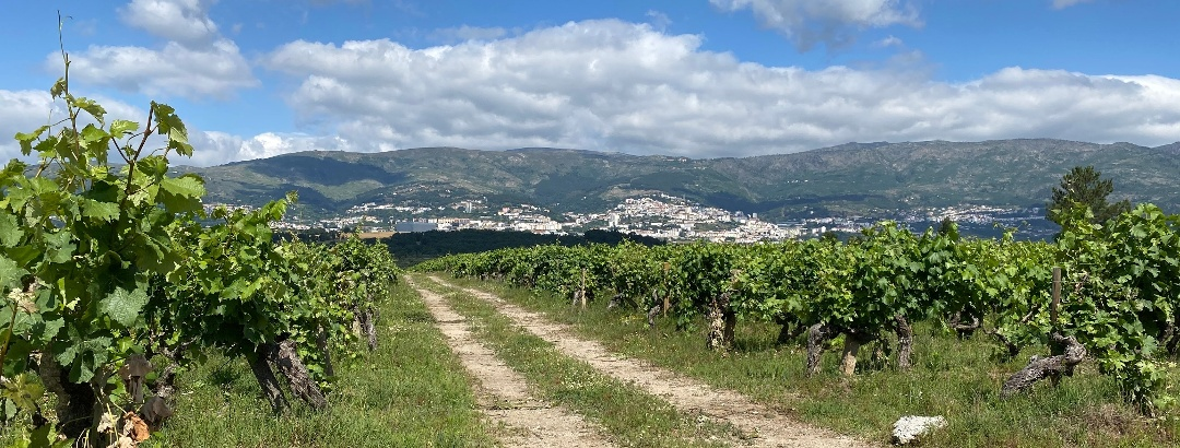GRZ: Irrigating Cova da Beira