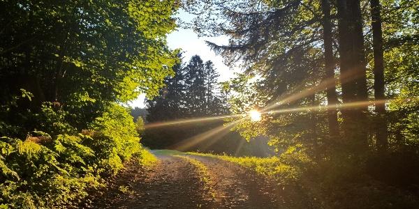 Schöne Abendstimmung im Rotenbergwald
