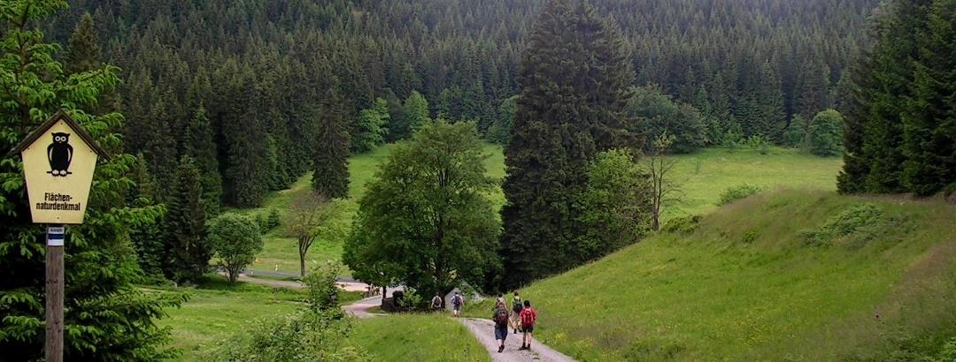Auf dem Kammweg Erzgebirge–Vogtland, Abstieg vom Auersberg