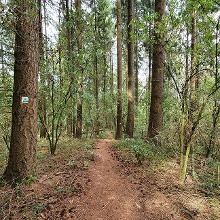 Die erste Waldetappe führt bergab