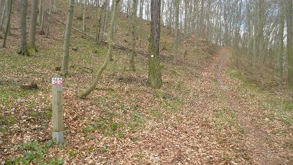 Weggabel im Wald zwischen Liebenau und  Lamerden - der Weg führt bergauf