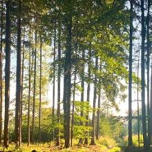 Im Wald am Welterbesteig