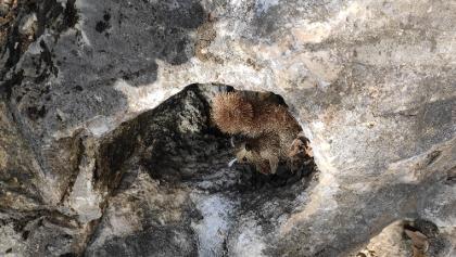 Egy sziklaüregben csíptük el