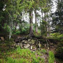 Typisch Nordschwarzwald