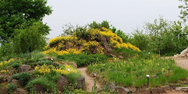 Im Frühling ist der Boselgarten am schönsten.