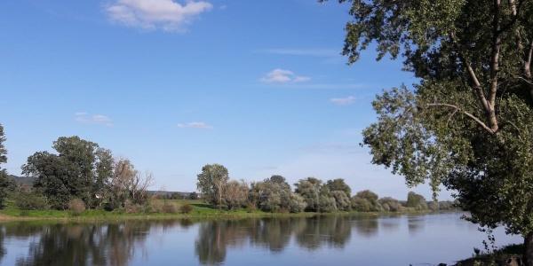 Elbe bei Niedergohlis