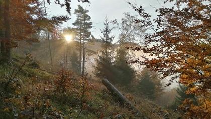 die Sonne verdrängt den Nebel
