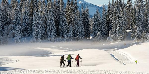 Winterwanderer Leutasch