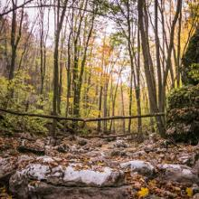 Szurdok ősszel 2