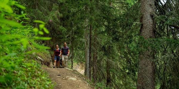 Wanderung im Bergwald