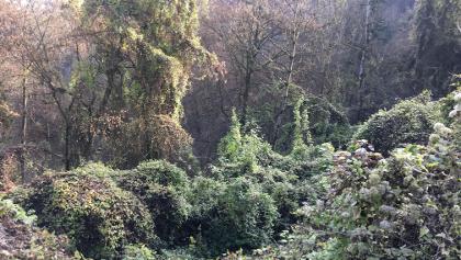 Auf dem steilen Weg von der Burg nach unten