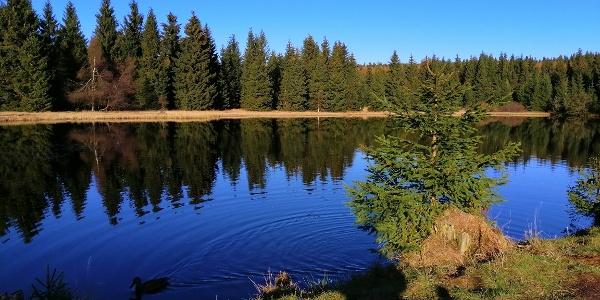 Wüster Teich in der Urlaubsregion Altenberg