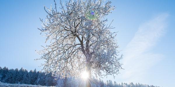 Winterlandschaft: Baum mit Sonne